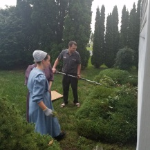 trimming the shrubs